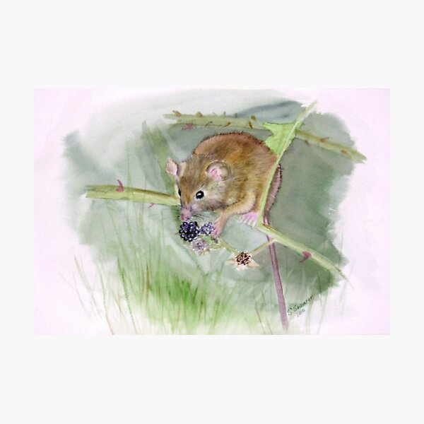 """Field Mouse"" Photographic Print"