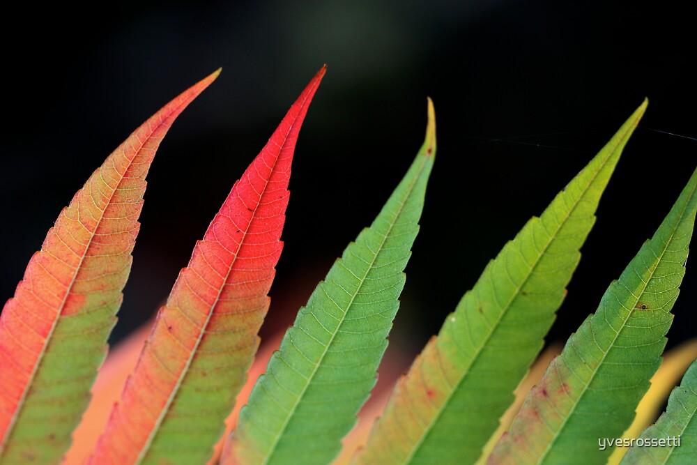 green flames by yvesrossetti