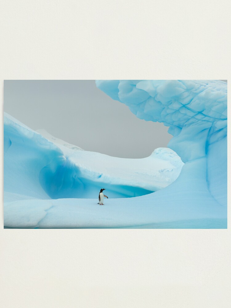 Alternate view of All alone in the ice Photographic Print