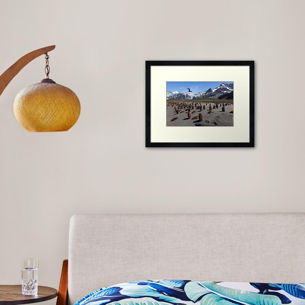 Skua flyby Framed Art Print