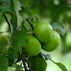 green apples by vigor