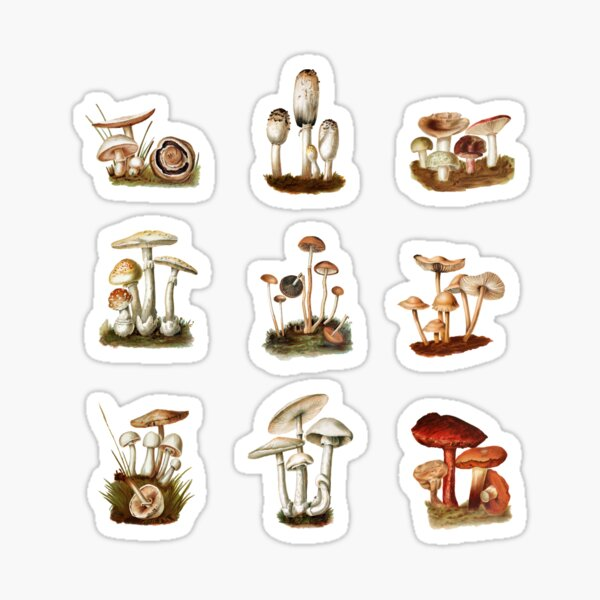 ilustraciones vintage de hongos y hongos Pegatina