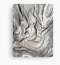 DRIFTWOOD STUDY 3 Metal Print