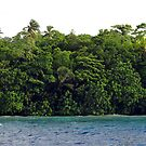 Jungle Shoreline II by Reef Ecoimages