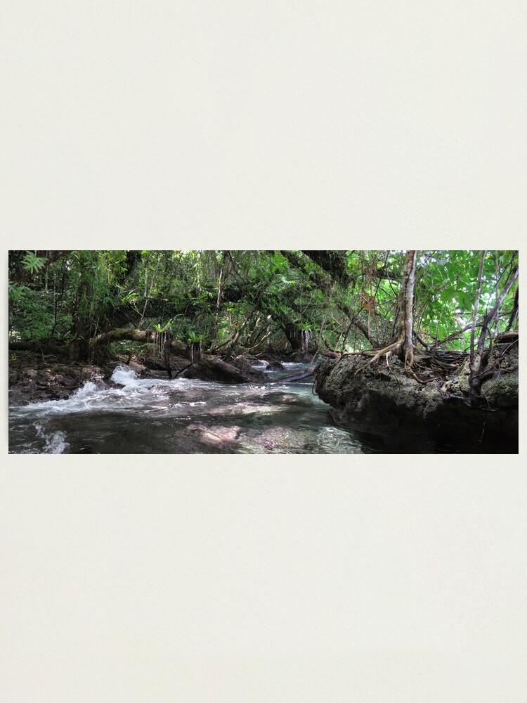 Alternate view of Jungle Shoreline IV Photographic Print