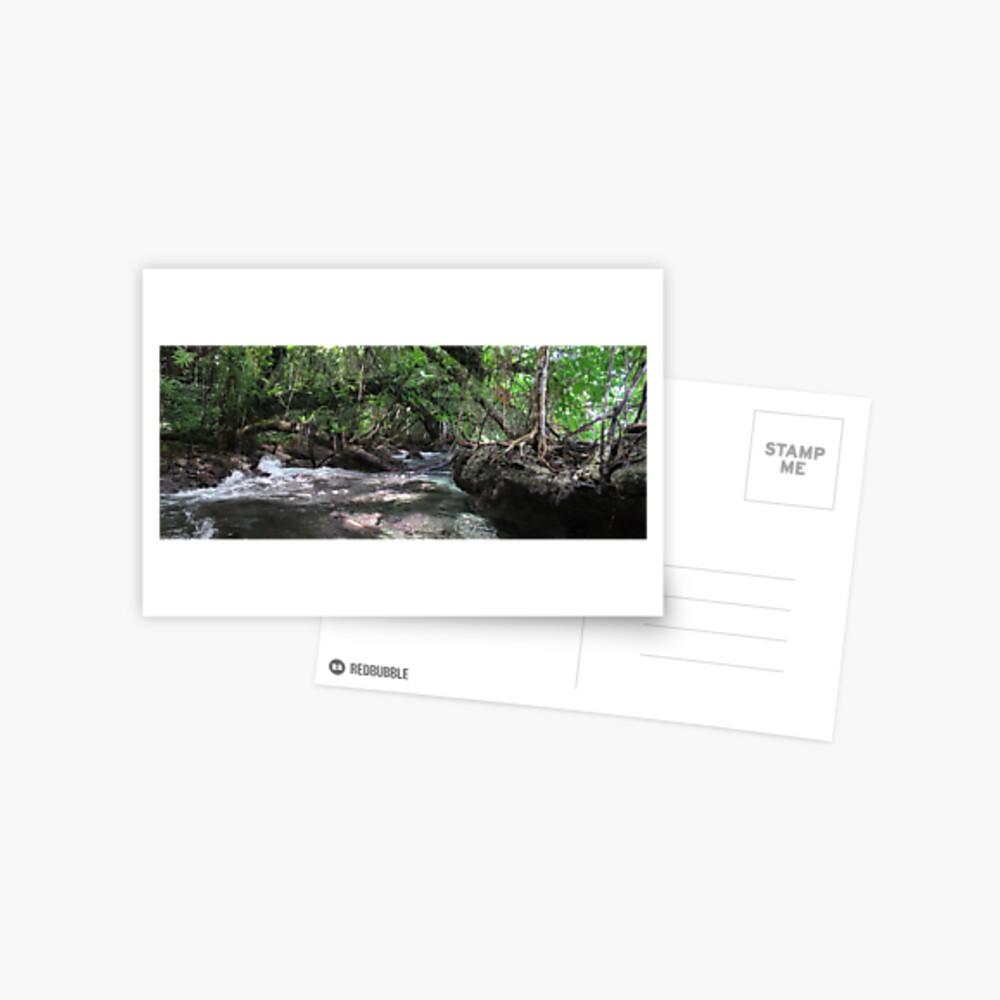 Jungle Shoreline IV Postcard