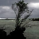 Squall at Skull Island by Reef Ecoimages