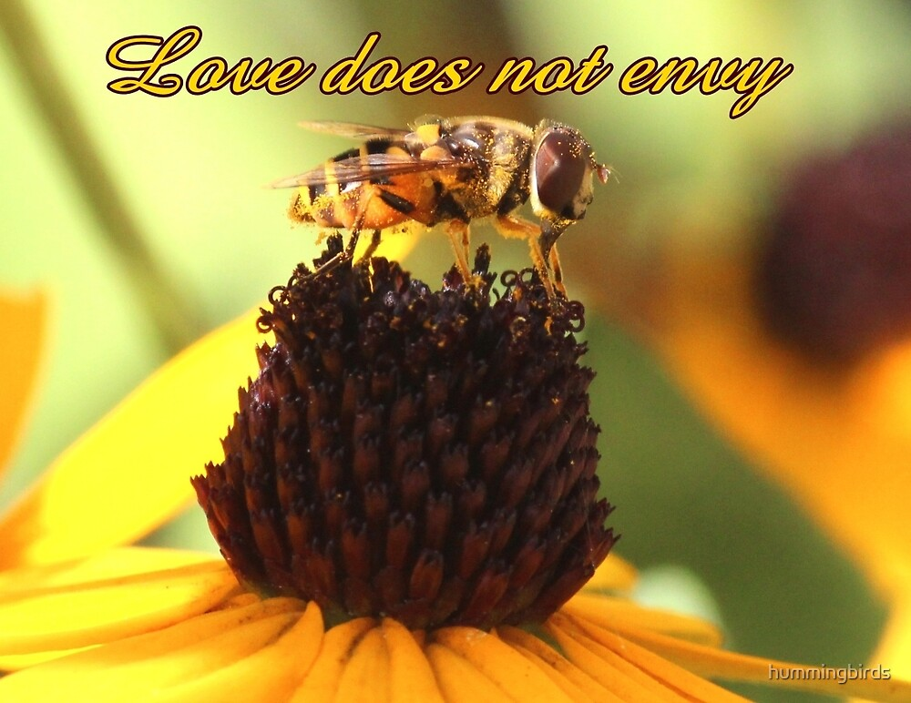 Love does not envy by hummingbirds