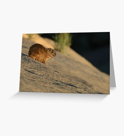 Rock Hyrax Greeting Card