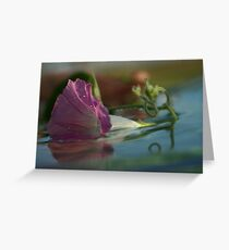 Morning Glory down the river  Petrusburg, South Africa Greeting Card
