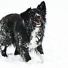 Snowballs..... by Karen Havenaar