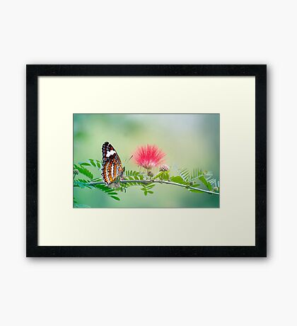Sitting Pretty - butterfly  Framed Print