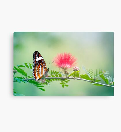 Sitting Pretty - butterfly  Canvas Print