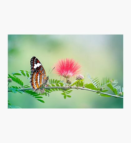 Sitting Pretty - butterfly  Photographic Print