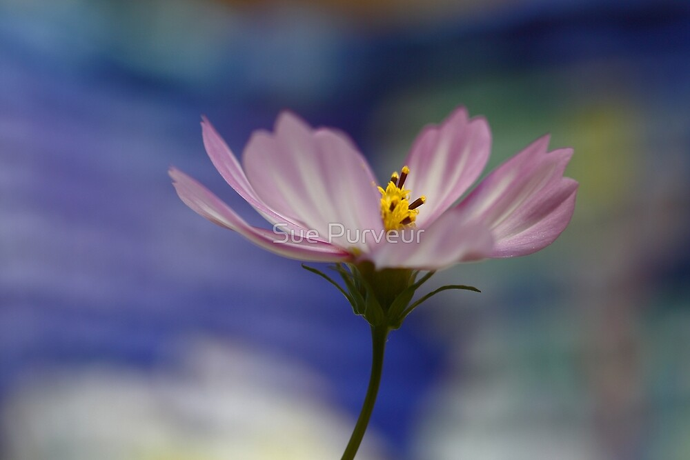 A moment of serenity in a busy world by Sue Purveur