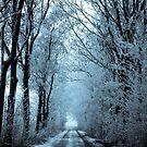 Winter Walking by JurrPhotography