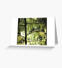 Moss and sunlight Greeting Card
