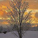 Lone Tree by Diana Nault