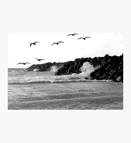 when life crashes around us, we can still fly Photographic Print