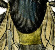 antique typographic vintage honey bee Sticker