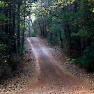 Road Not Taken - Dirt road in Cass County, Texas by Betty Northcutt