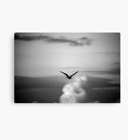 Noisy Bird Canvas Print