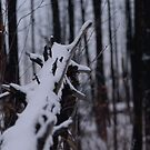 Snow in a Dead Forest by Michael Garson