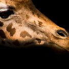 Giraffe  by photo-kia