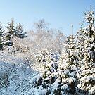 Snowy Backyard by Detlef Becher