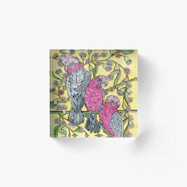 Galahs and Flowering Gum Acrylic Block