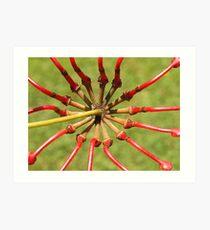 Flower of Firewheel Tree - Drouin Art Print