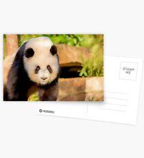 Giant Panda (digital painting) Postcards