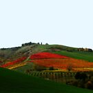 Colours of an Italian Vineyard by Marilyn Harris