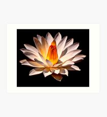 Yellow Glow Fragrant Water Lily Art Print