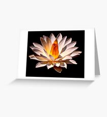 Yellow Glow Fragrant Water Lily Greeting Card