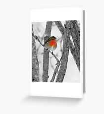 Robin,the colourful guest Greeting Card