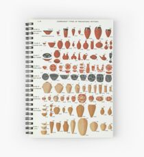 Petrie's Pottery Seriation Spiral Notebook