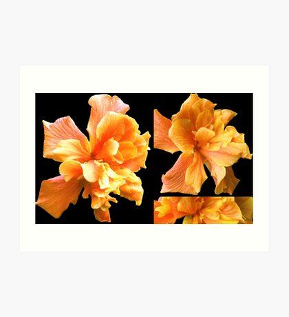 Double Orange Hibiscus Art Print