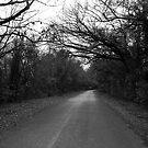 Fall Creek Road by Jeffery W. Turner