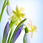 Spring flowers by Yool