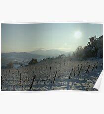 Snowy Vineyard Poster