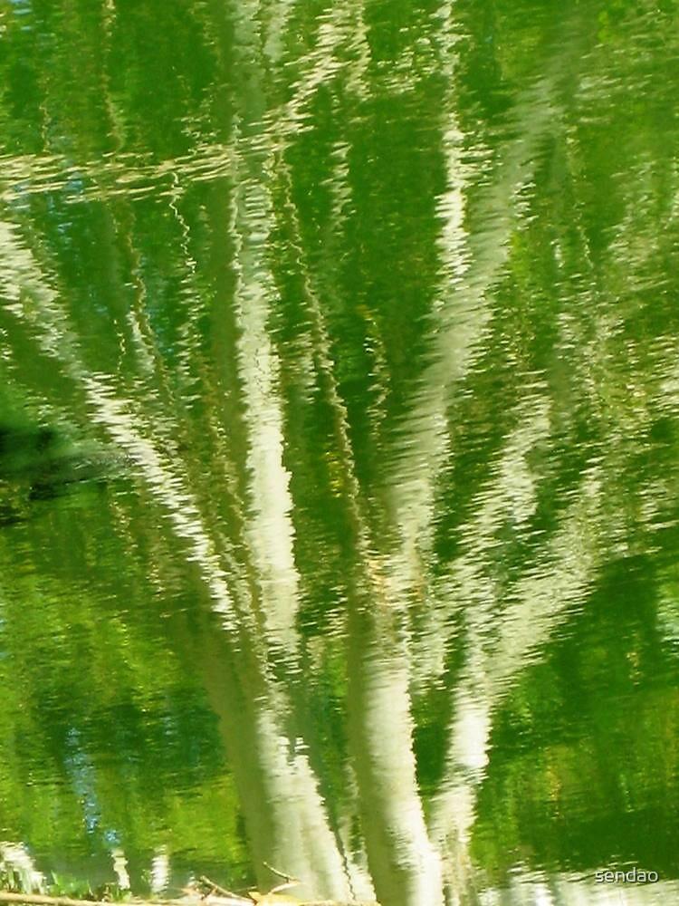 Reflection Cuban tree!... by sendao