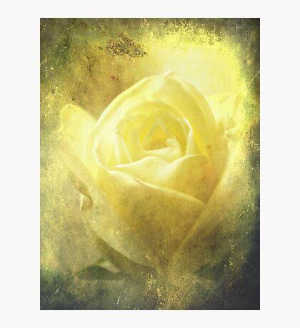 Antique Rose. Photographic Print