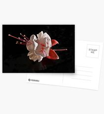 Fuchsia Postcards