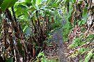 Jungle Walk by Walter Quirtmair