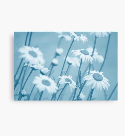 Daisies in Blue #2 Canvas Print