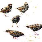 Five cheeky Starlings. by artfulvistas