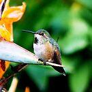 Baby Hummingbird by loiteke