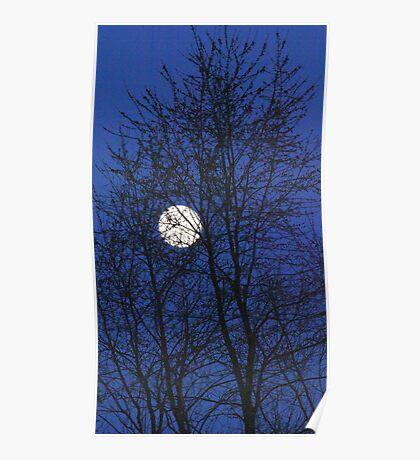 December Moon Poster