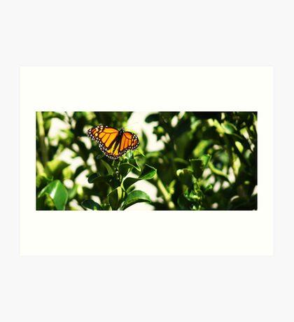 Momentary Monarch Art Print